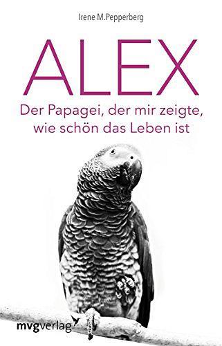 Graupapagei Alex